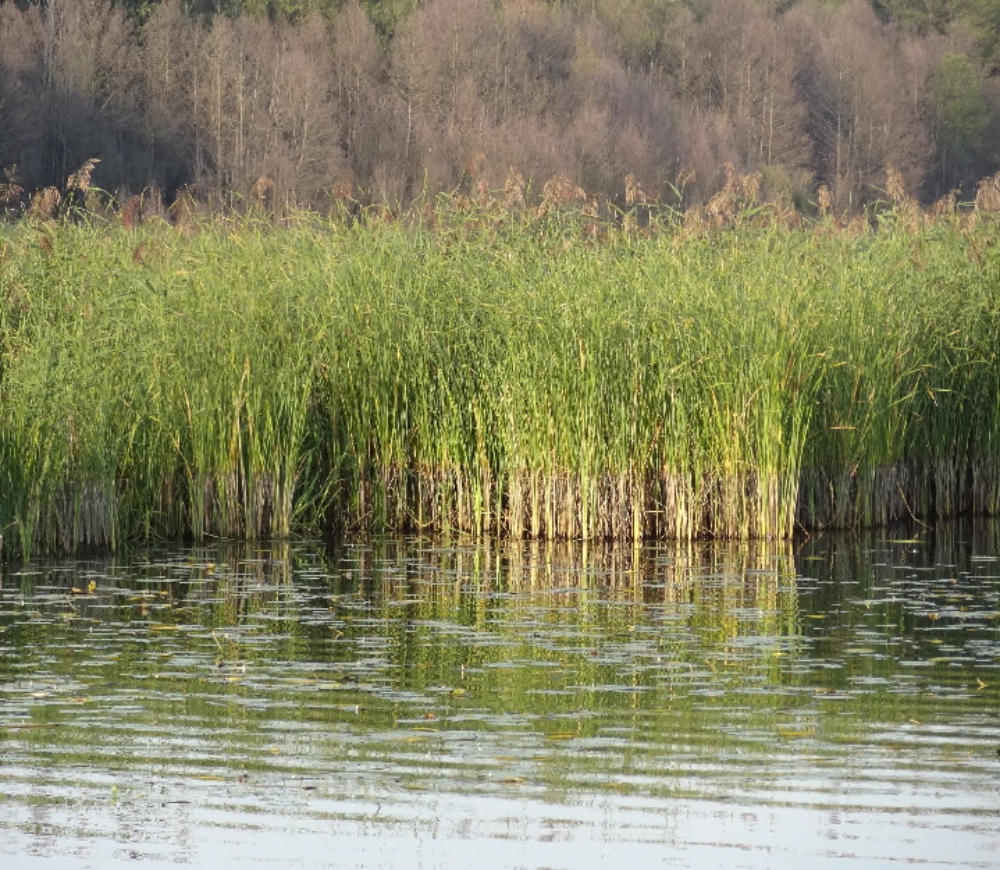 Gedicht Abangeln Am Neuendorfer See